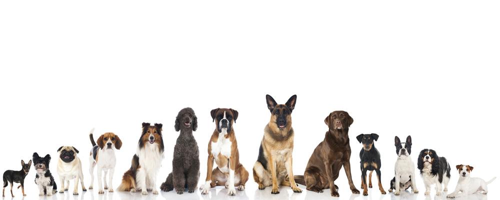 www.talk-about-dogs.de