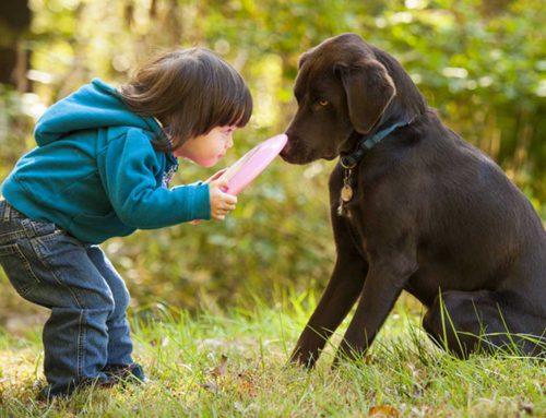 Hundeverhalten lernen